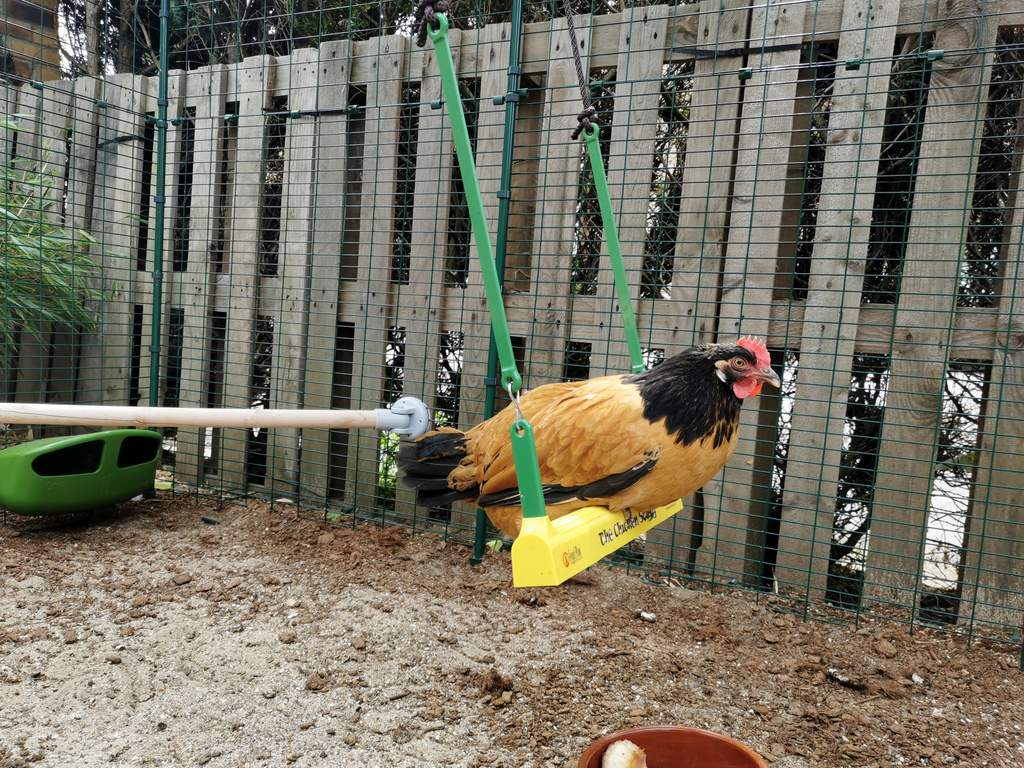 Hønsehuslampe   Utstyr til hønsehold   Hønsehus, hønsegjerde
